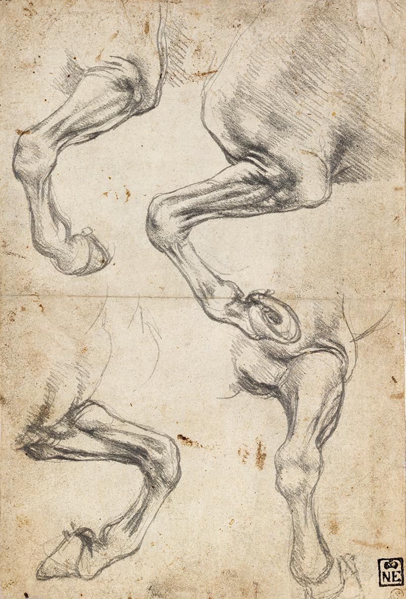 Studies of Horses Leg Leonardo da Vinci Pferd Fuß Hufe Bein Anatomie ...