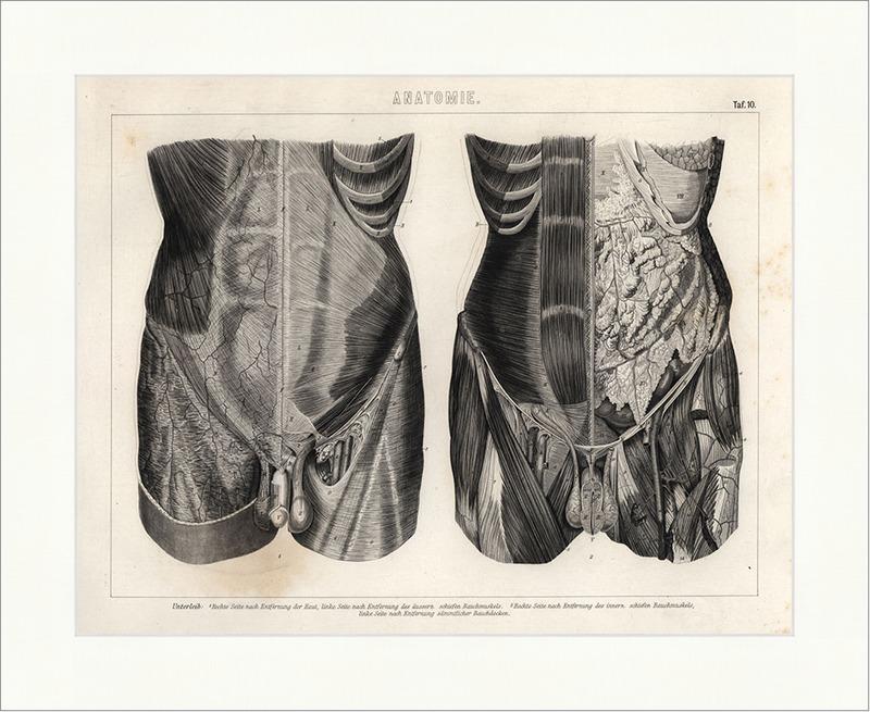 Unterleib Bauchmuskel Bauchdecke rechte Seite Brockhaus Bilder Atlas ...
