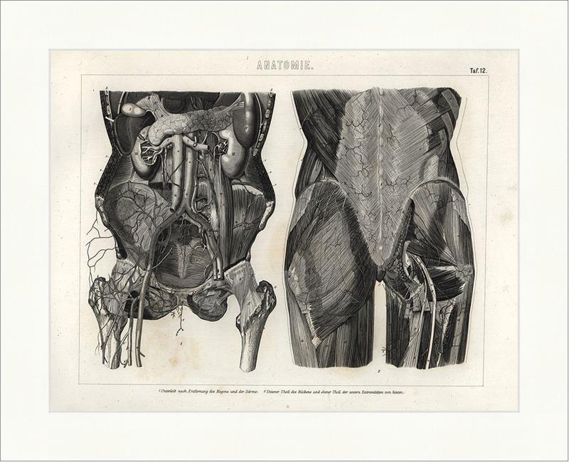 Unterleib unterer Teil des Rückens von hinten Brockhaus Bilder Atlas ...