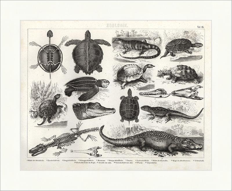 Wunderbar Schildkröte Innere Anatomie Bilder - Anatomie Ideen ...