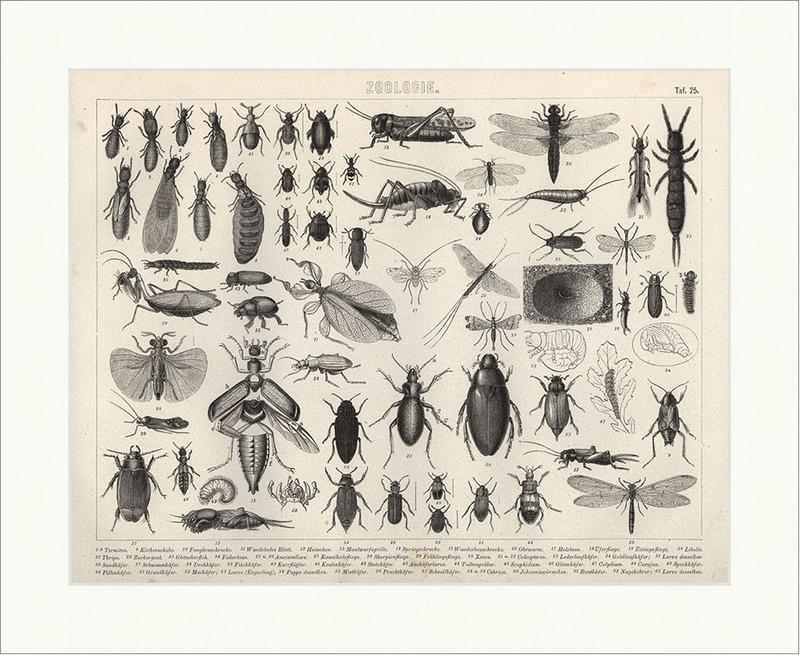 Küchenschabe Termiten Libelle Speckkäfer Brockhaus Bilder Atlas ...