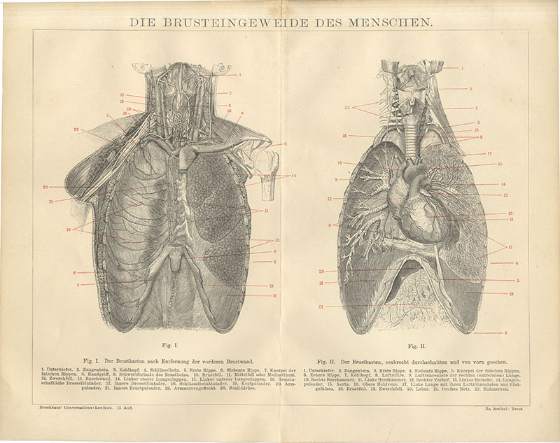 Tolle Halsnerven Galerie - Anatomie und Physiologie des ...