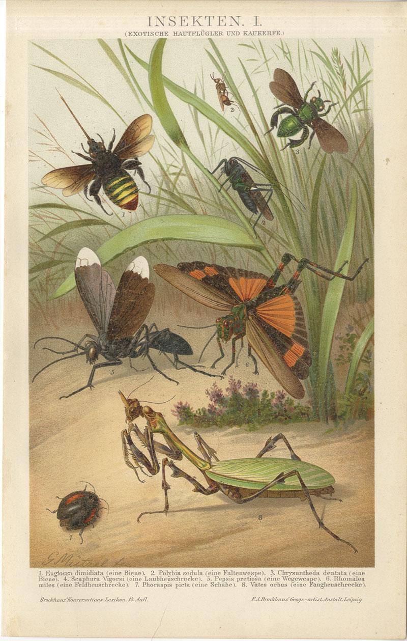 Gemütlich Insekten Innere Anatomie Bilder - InsureForAll