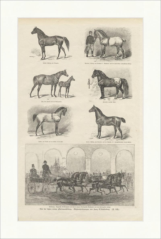 Von der letzten wiener Pferdeausstellung O Stückenberg Tiere ...