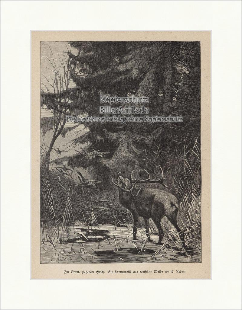 Zur Tränke ziehender Hirsch C. Kröner Sommerbild Wald Holzstich ...
